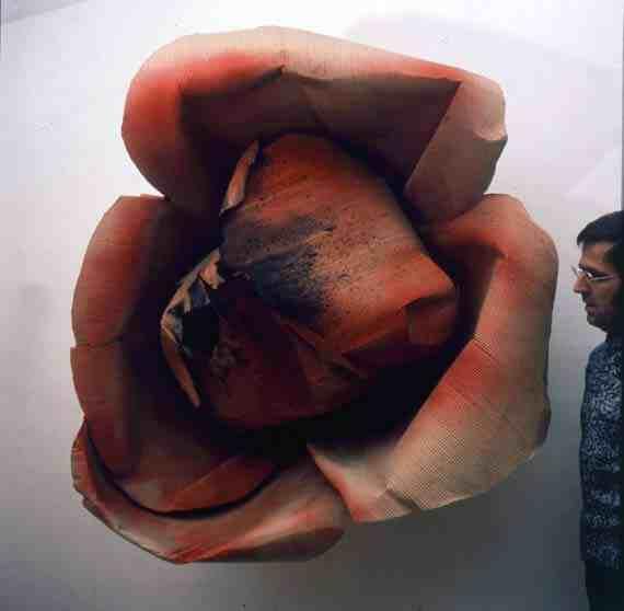 Rosa bruciata