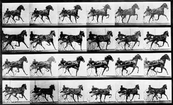 Eadweard Muybridge: Occident Trotting