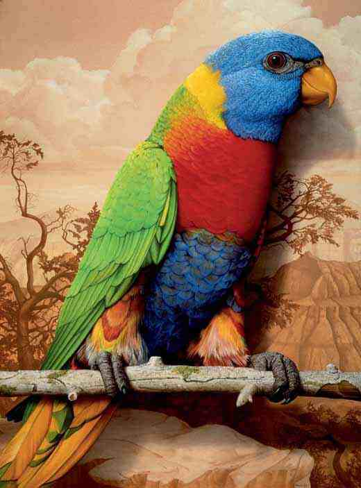 Tom Palmore: Rainbow Parrot in the Golden West