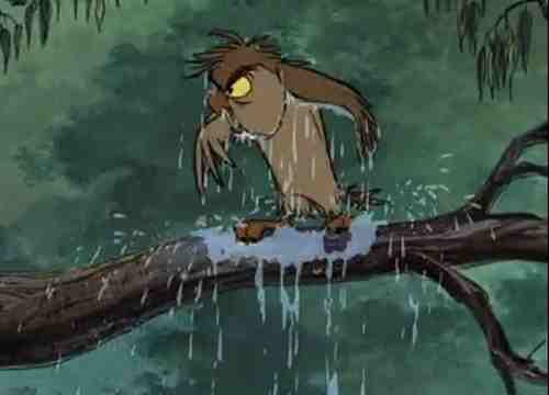 Archimedes the Owl, all wet.