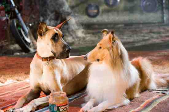 Movie Still: Marmaduke
