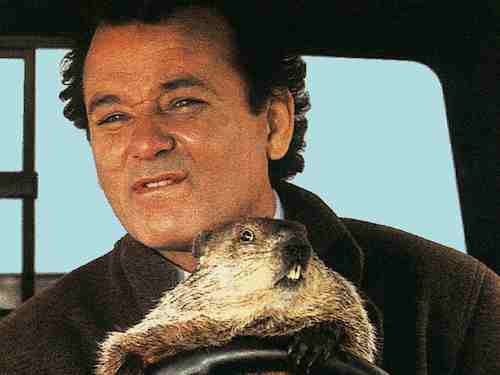 Groundhog Day - Bill Murray and Groundhog