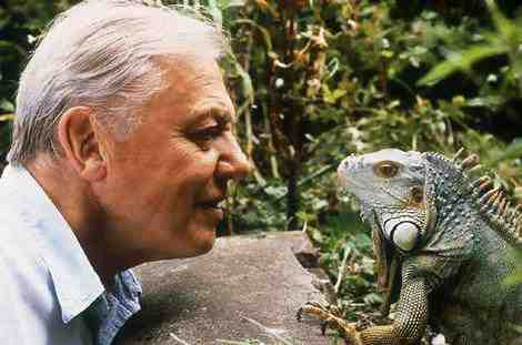 Sir David Attenborough, famed naturalist, with Iguana